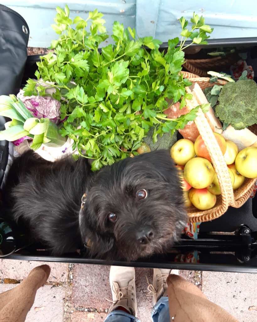 Hund,Gemüse und Obst im Lastenrad