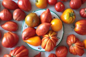 Viele rote und orange Tomaten auf einem Teller